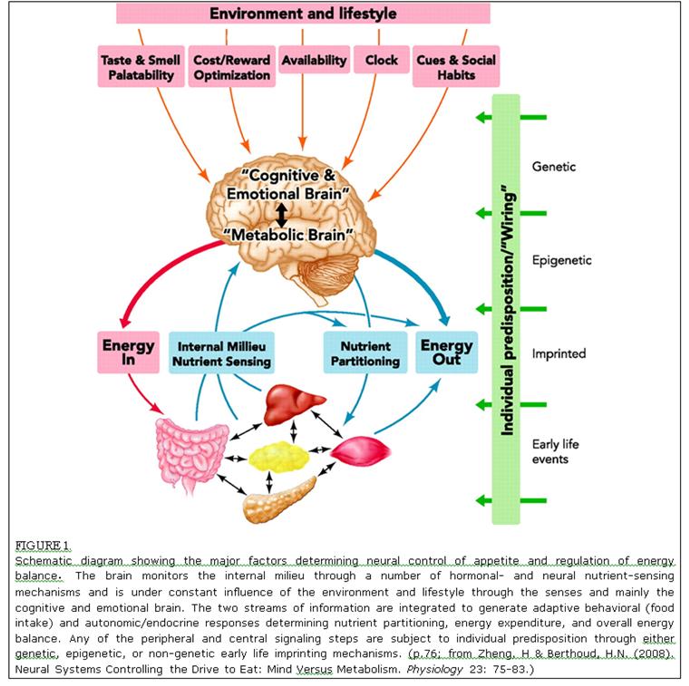 Mind versus Metabolism