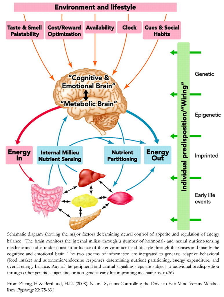 mind versus metabolism 2