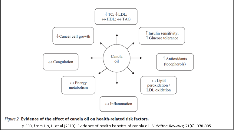 evidence of the effects of canola oil on health related risk factors